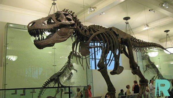 Тираннозавр Скотти стал самым большим представителем своего вида