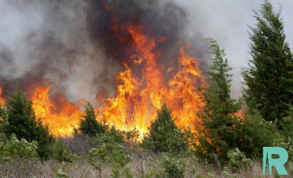 При тушении лесных пожаров в Китае погибли 26 человек