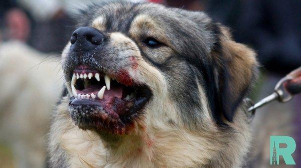В Москве зарегистрированы шесть случаев бешенства у животных