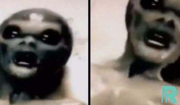 Ученые спрогнозировали как могут выглядеть инопланетяне в самом деле