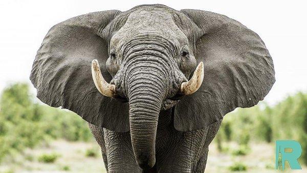 В Канаде работник зоопарка был атакован слоном
