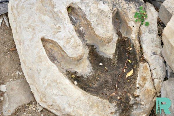 В Китае впервые обнаружили окаменелый след тираннозавра