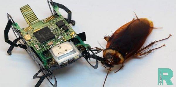 """В США создан """"робот-таракан"""" для поисково-спасательных работ"""
