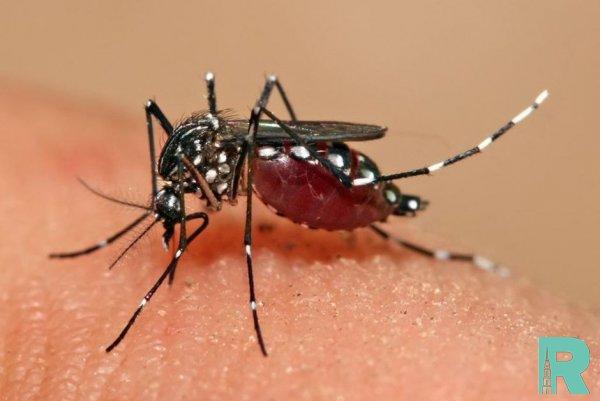 Россиян предупредили о смертельных лихорадках разносимых комарами