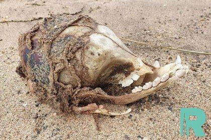 В Англии на берегу найден загадочный череп без глазниц