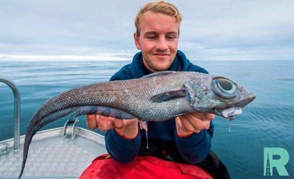 У берегов Норвегии поймали похожую на динозавра рыбу-химеру