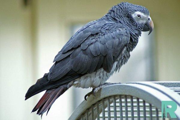 За продажу больного попугая москвич был оштрафован на 140 тысяч рублей
