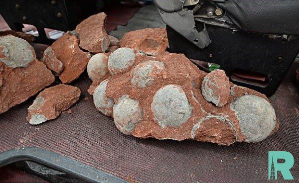 Ребенок в Китае нашел 11 ископаемых яиц динозавра