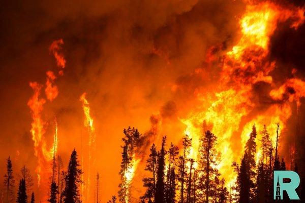 На Канарах из-за лесных пожаров эвакуировали 2000 человек