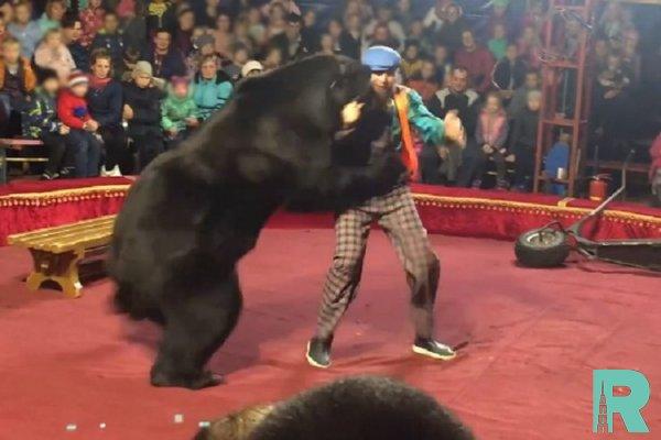 В Карелии в цирке во время представления на дрессировщика напал медведь