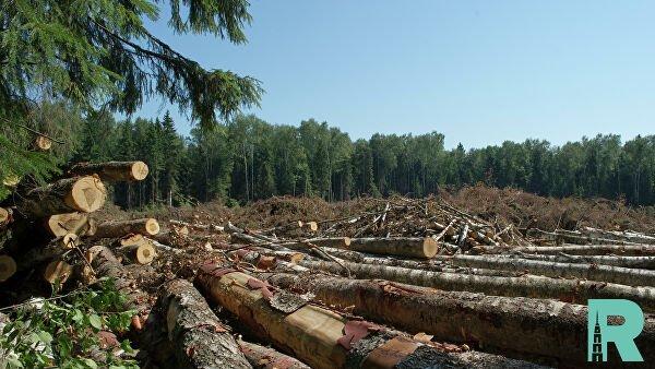Из-за сплошной вырубки лесов возрастает температура грунта